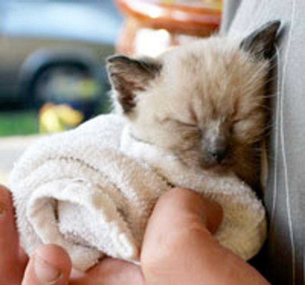 Tiny Maintenance Shed Kitty
