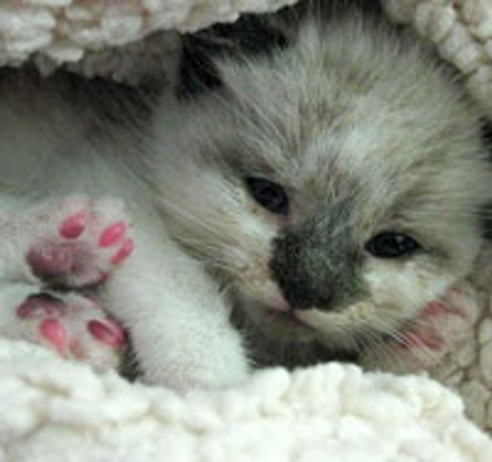 Little Pink Paws in Action