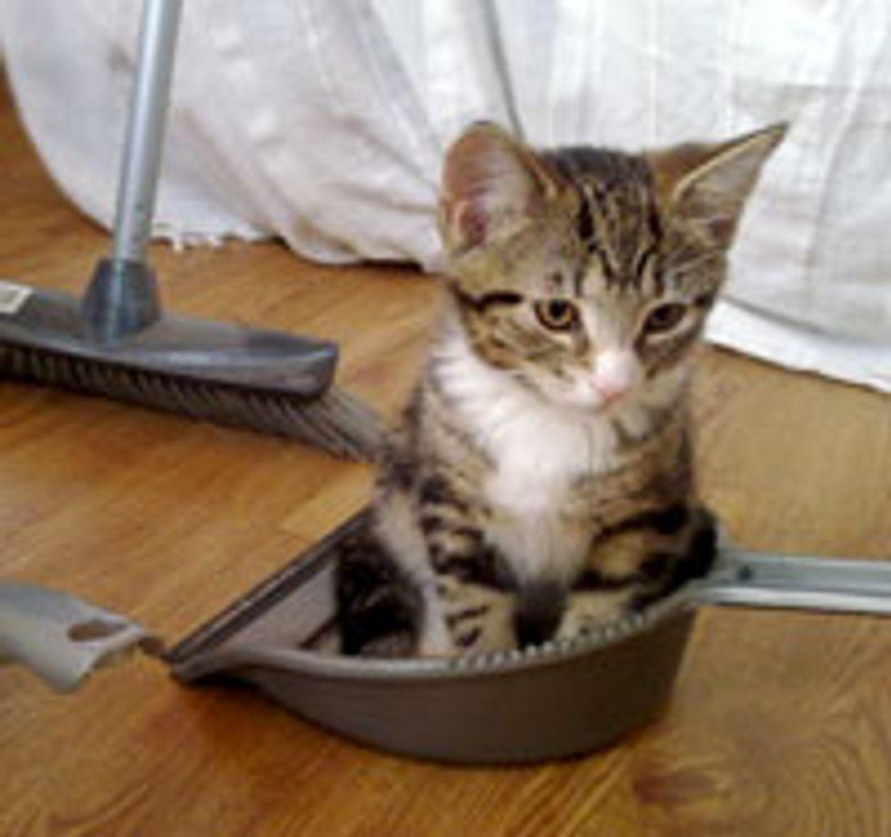 Little Clean-Up Helper