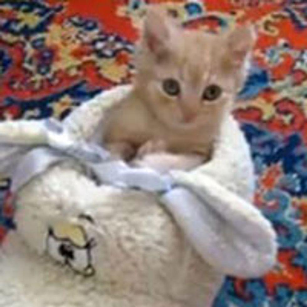 Kitten Falling Asleep in Fluffy Shoe