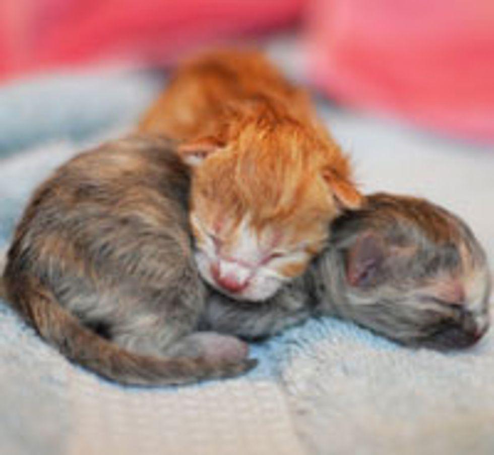 3 Tiny Precious New Borns