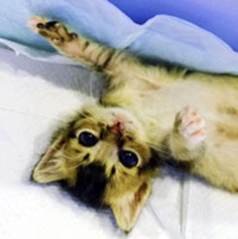 Teeny Demanding Kitty