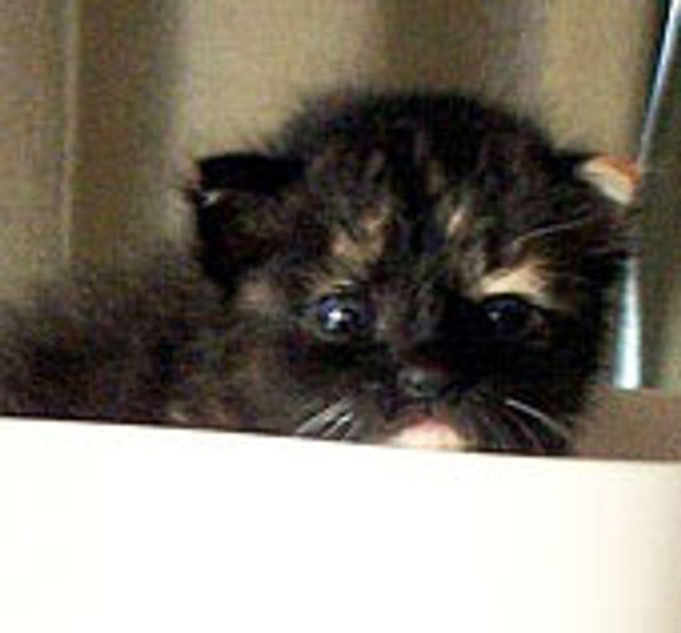 Little Tortie Kitten Found Home and TLC