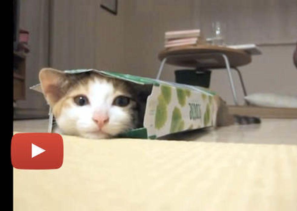 When Cute Kitten Sees a Small Box...