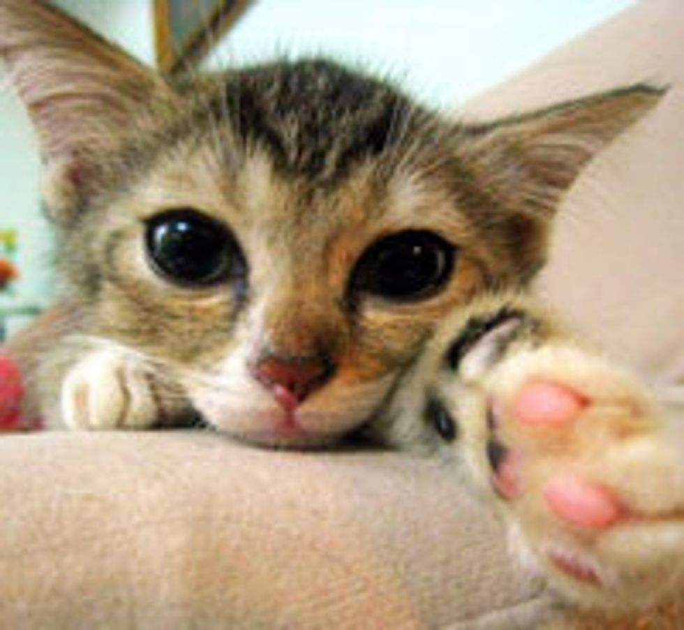 Cute Kitty is Pawesed to Meet You