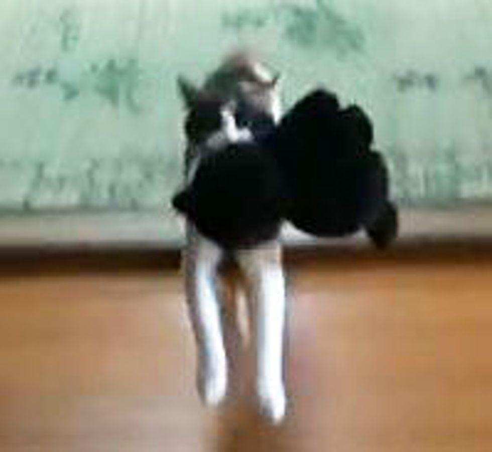Kitty Fetches Stuffed Animal