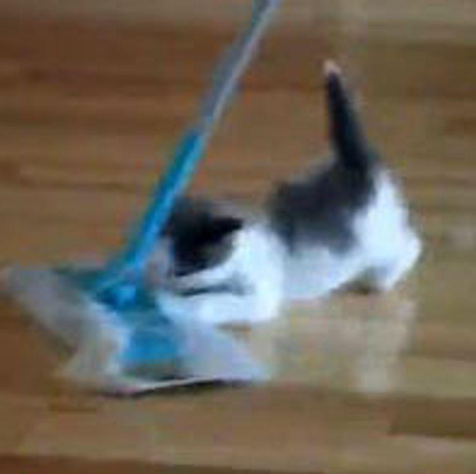 Kitten vs Swiffer