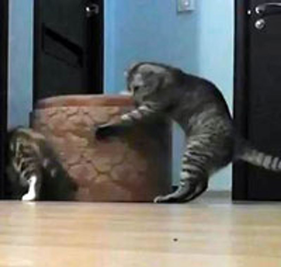 Very Strong Kitty