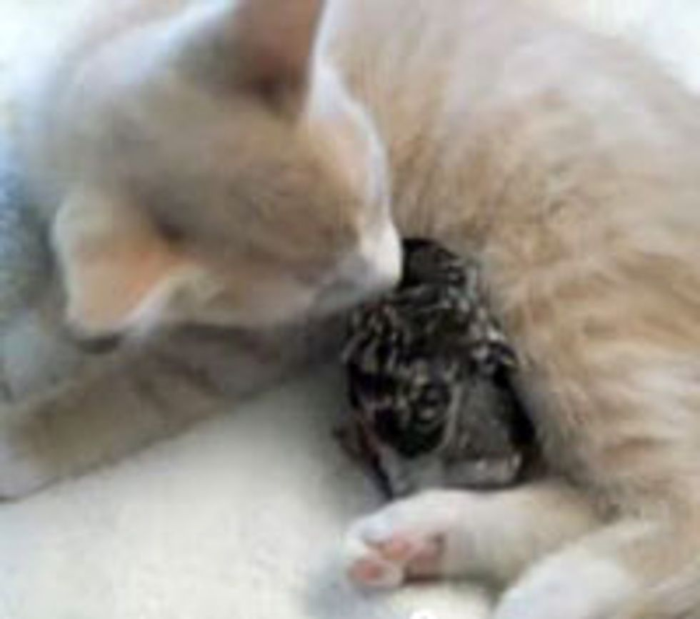 Kitty Gives Birdie Motherly Love