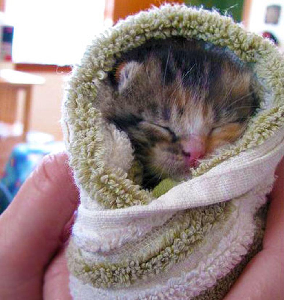 Teeny Tiny Bundle of Cute