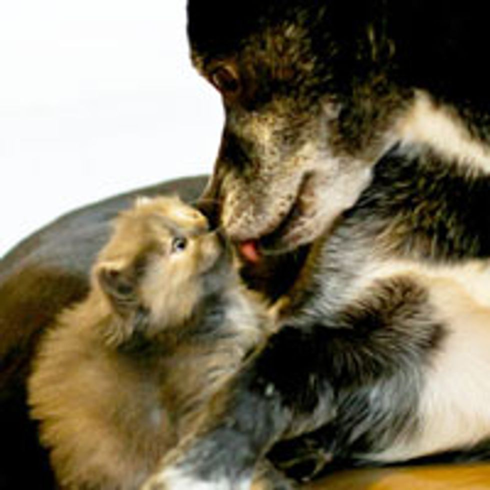 Kitten Gives Doggie Snuggles and Kisses