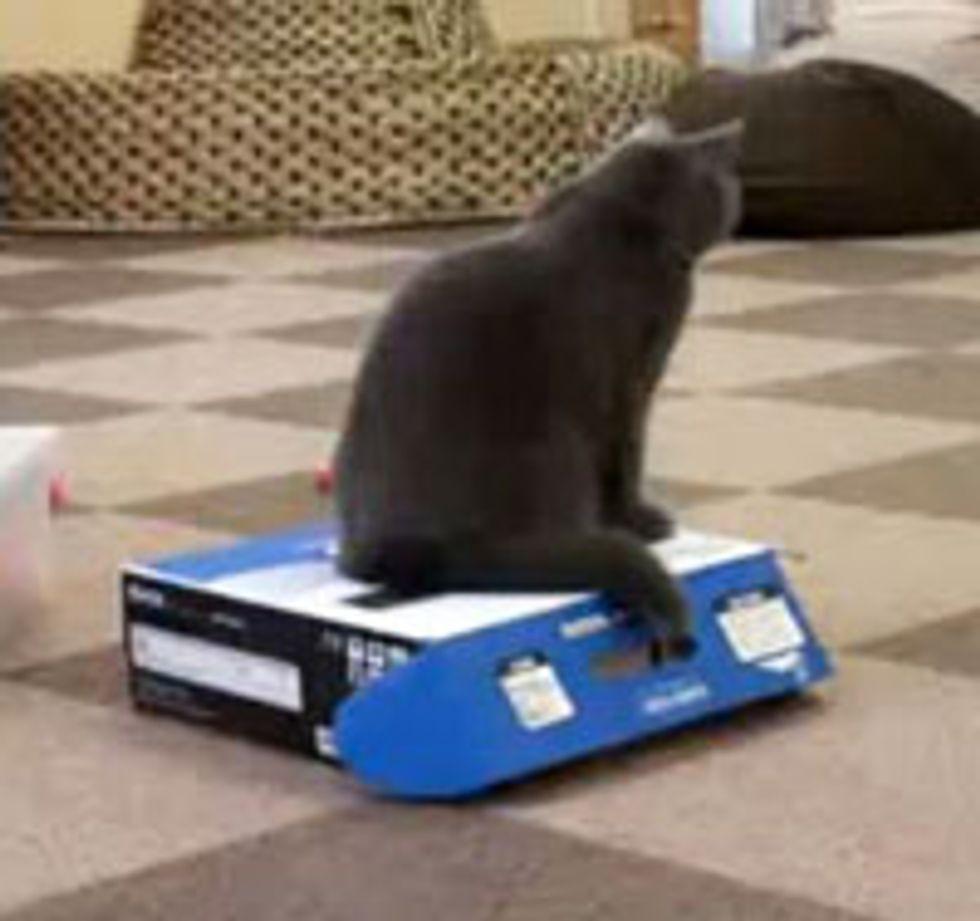 The Kitty Illusionist