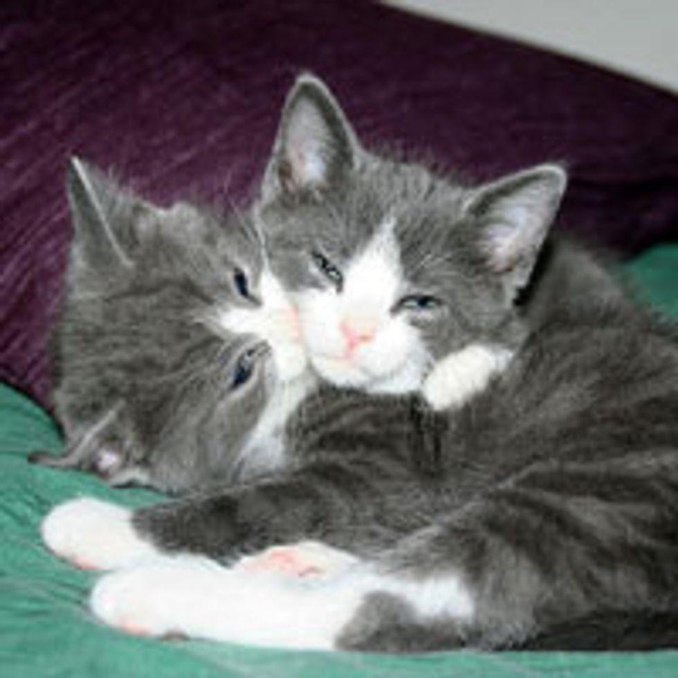 Identical Snuggly Lovebugs