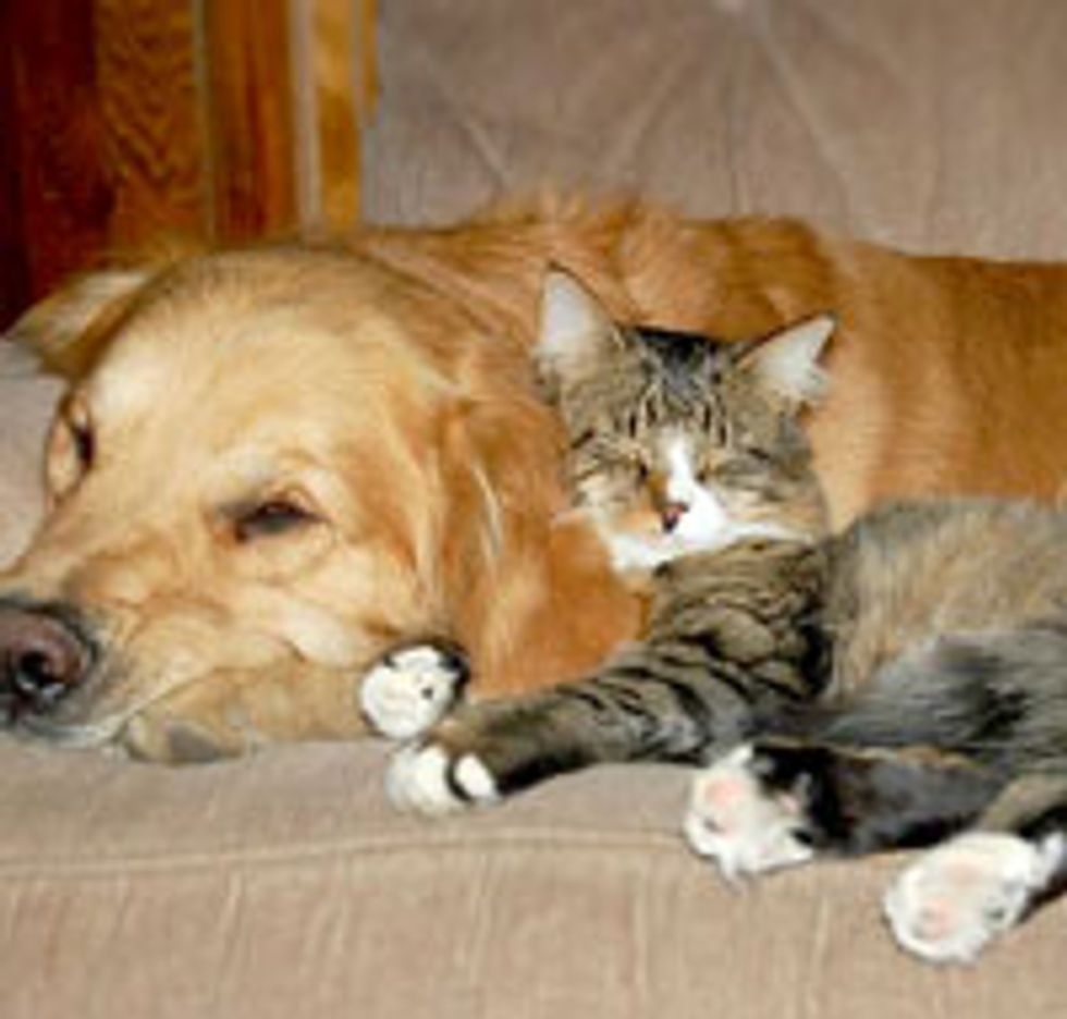 Kitty Rescued by Dog and Became Best Friends