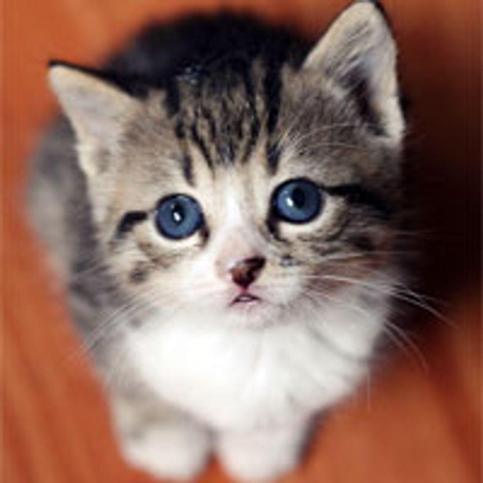 Tiny Tabby with Eyes that Hypnotize