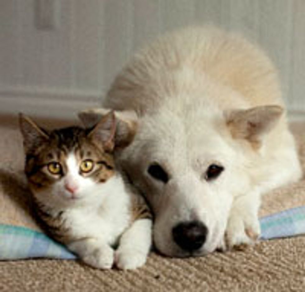 Orphan Cat Raised by Rescue Dog, Furry Friends for Life