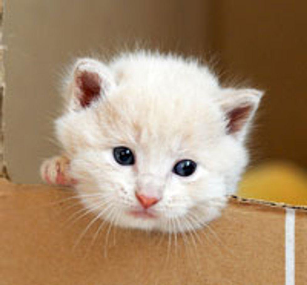 Little Watch Kitty
