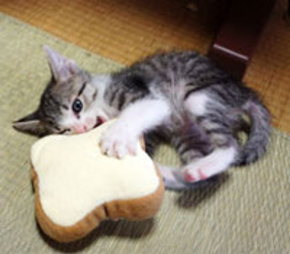 Kitty Wrestling with Bread Toys