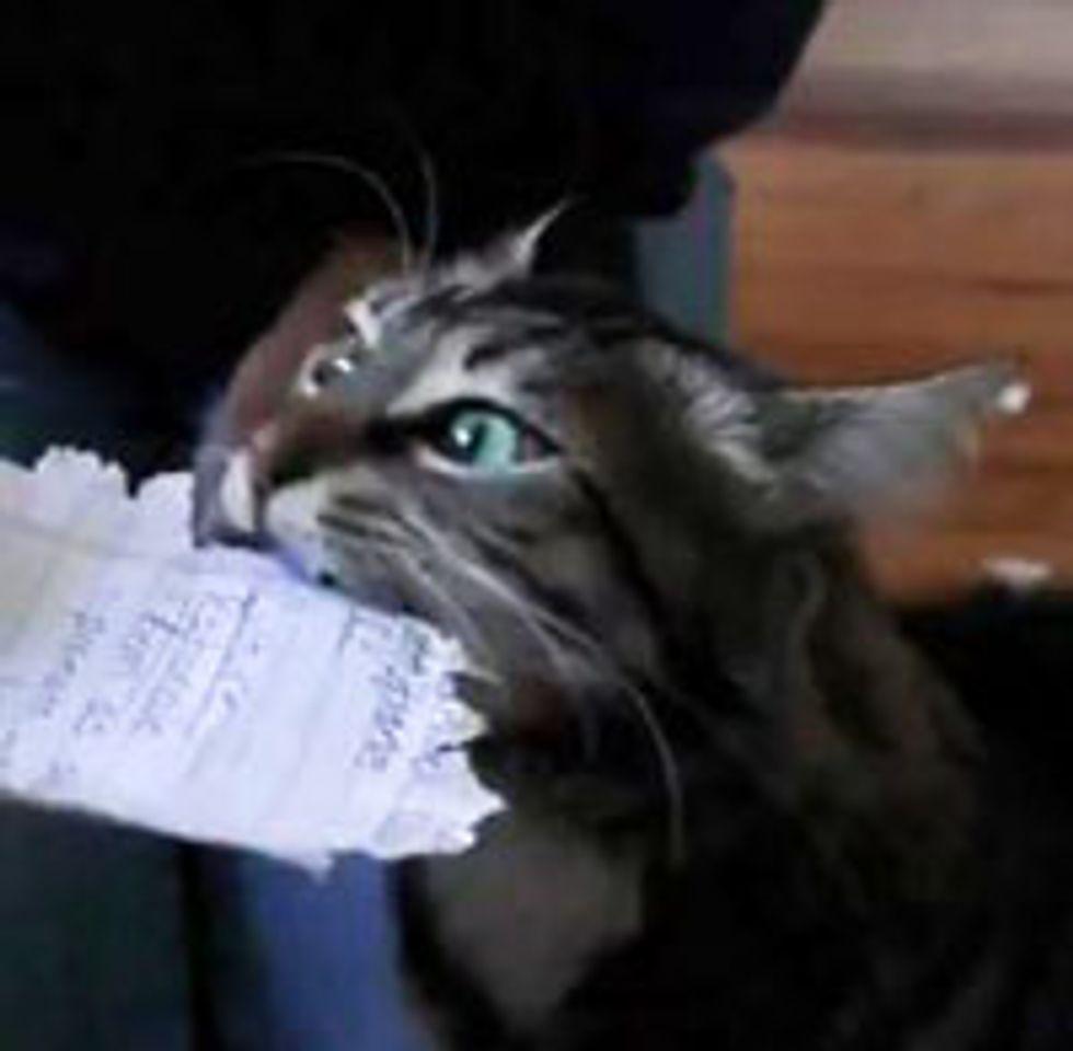 Kitty Shredding Paper