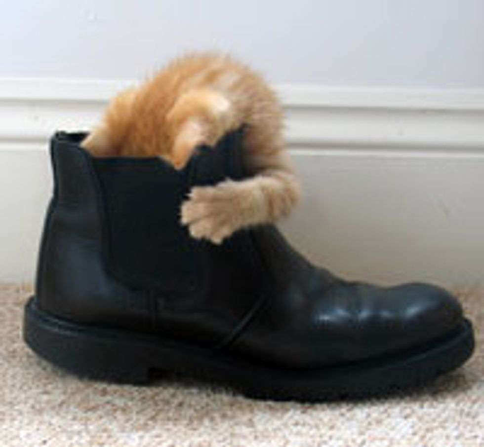 Puss n' Boot