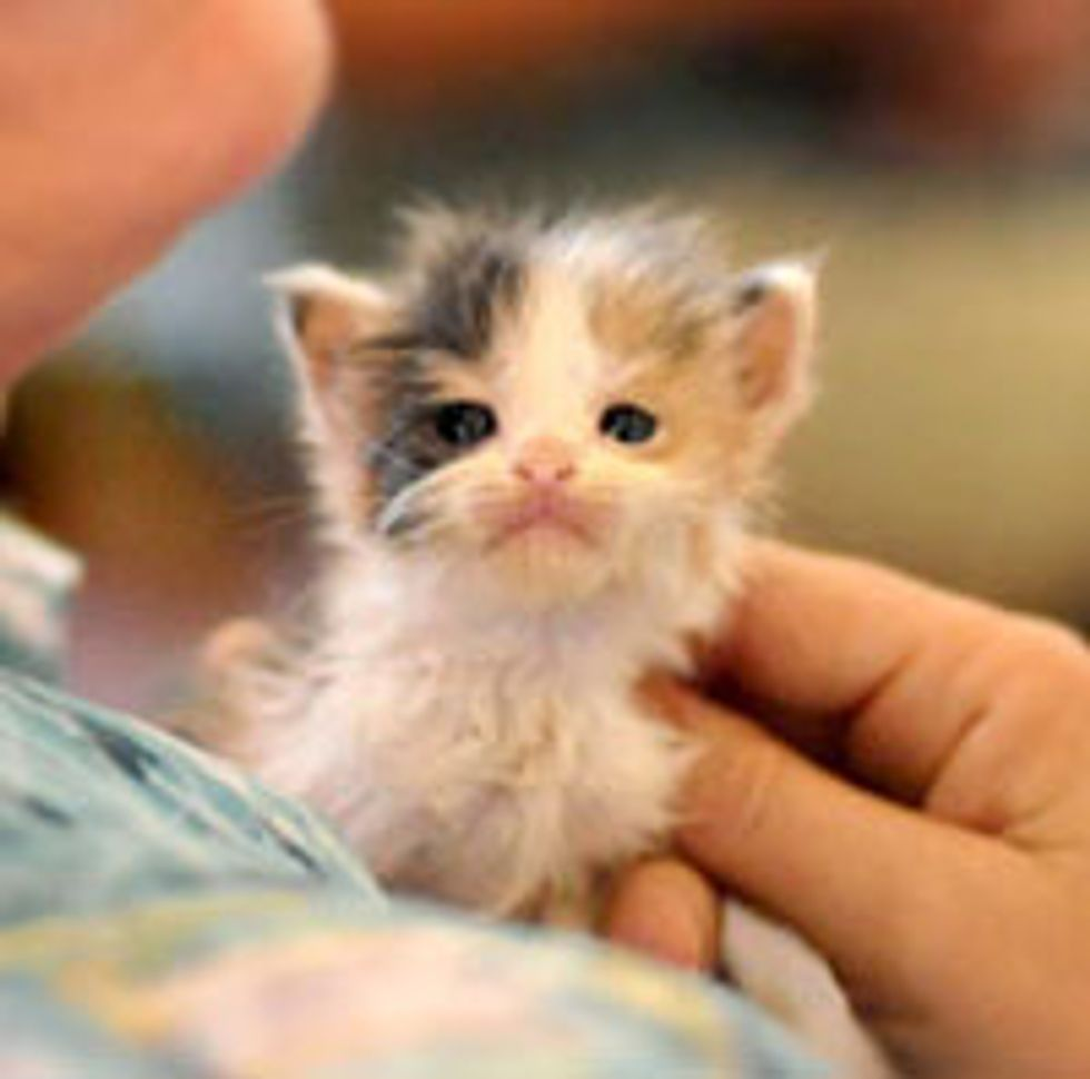 Itty Bitty Face that Melts Hearts!