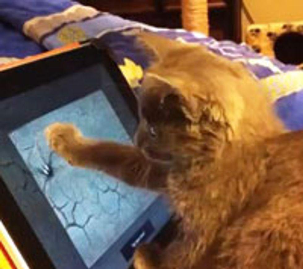 Kitty Catching Spider on iPad