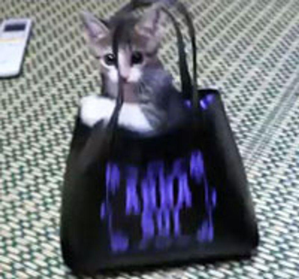 Kitten Turns Bag into Jungle Gym