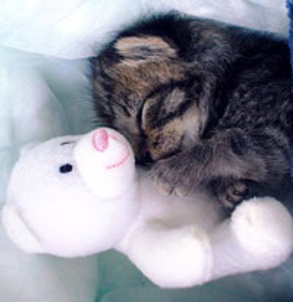 Munchkin and His Security Teddy