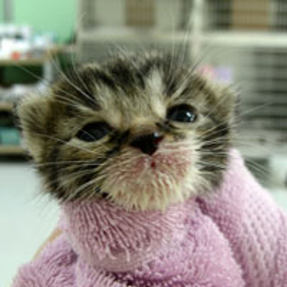 Tiny Bundle of Cute with Milk Mustache
