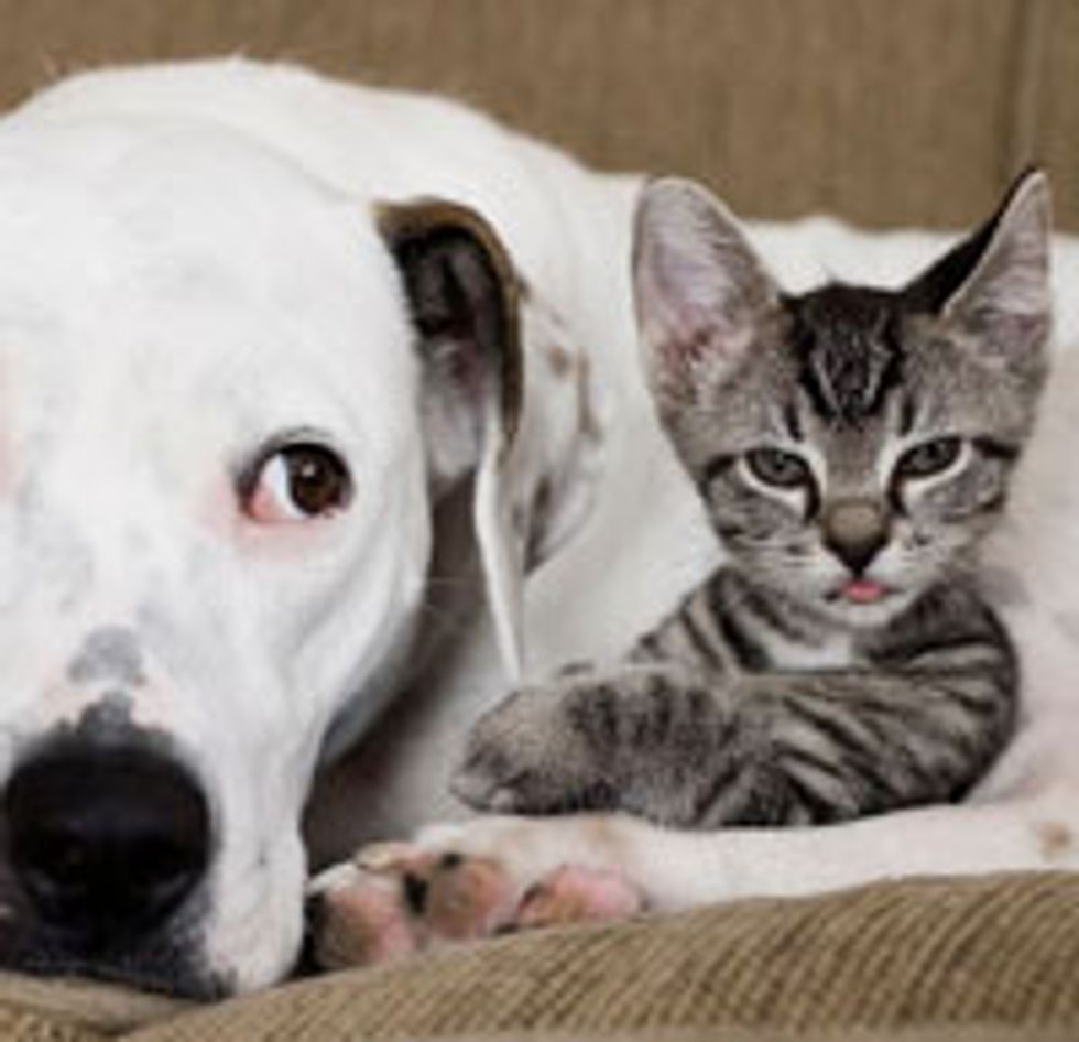 Tiny Tabby Foster Found Mother in Dog
