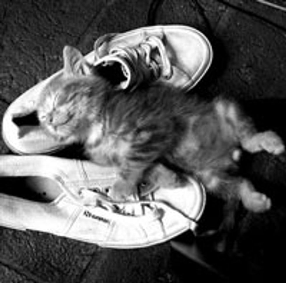 Shoes Make Kitty a Happy Sleeper
