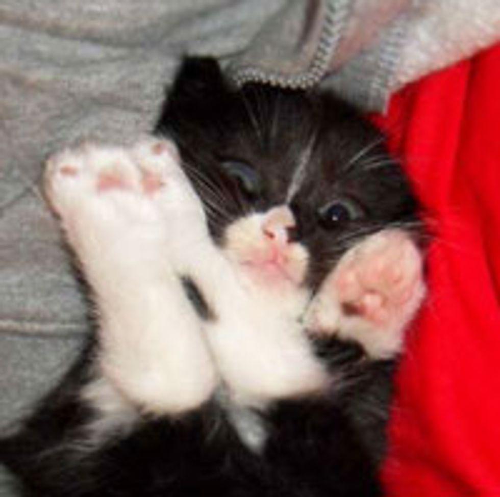 Little Tuxedo, Miss Purrsonality