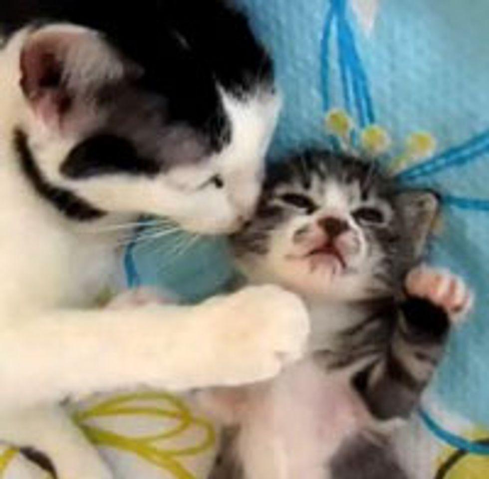 Cat Mama Comforts Sleeping Baby