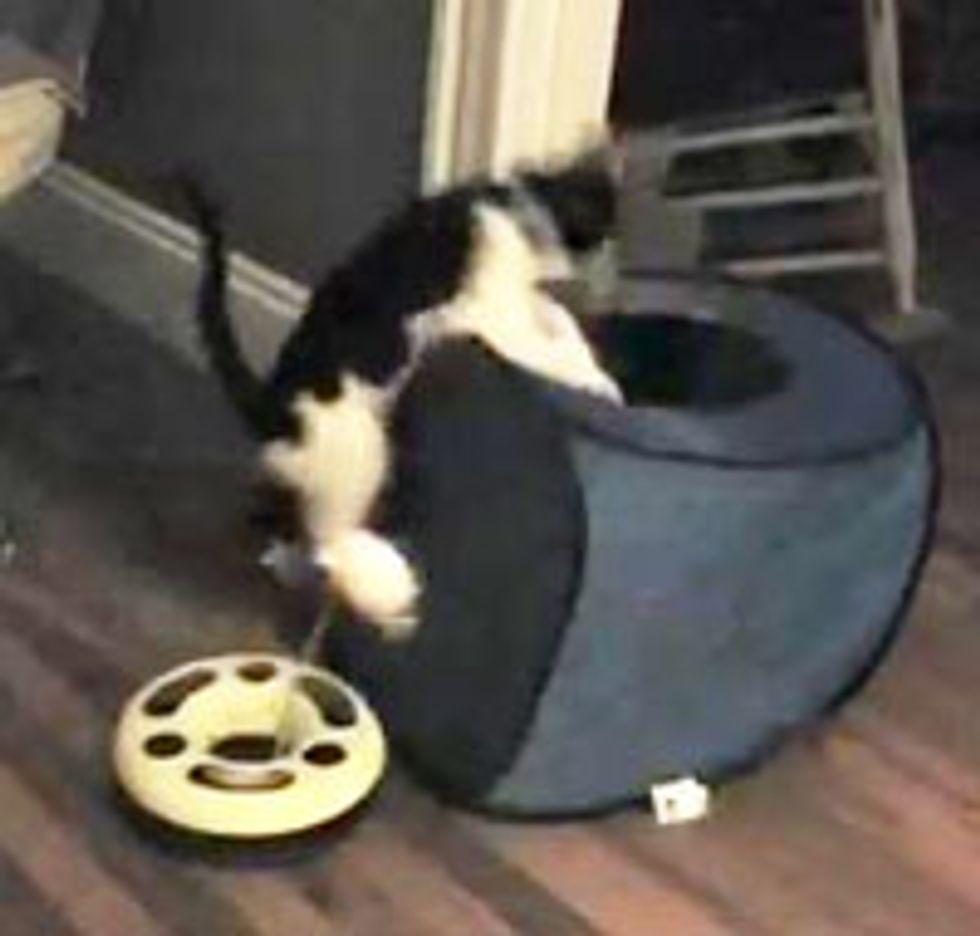 Jumping Cube Kitty