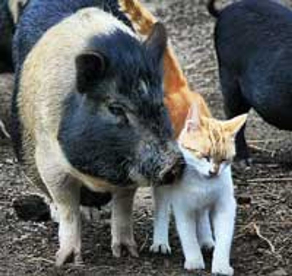 Kitty and Piggy, Best of Friends