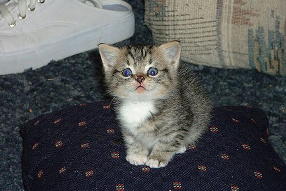 Peanut the Trailer Kitty