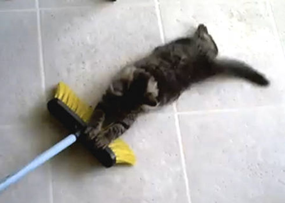 Kitty Taking a Broom Ride