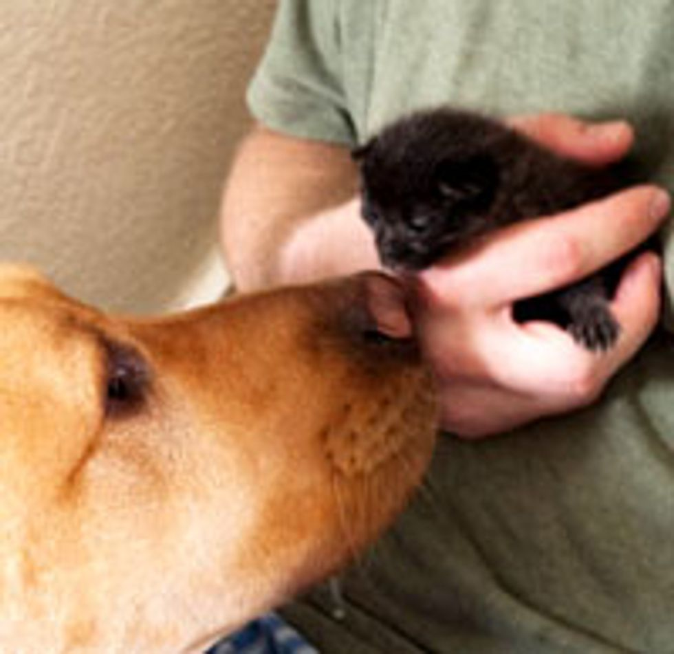 Tiny Black Kitten Found Canine Brother