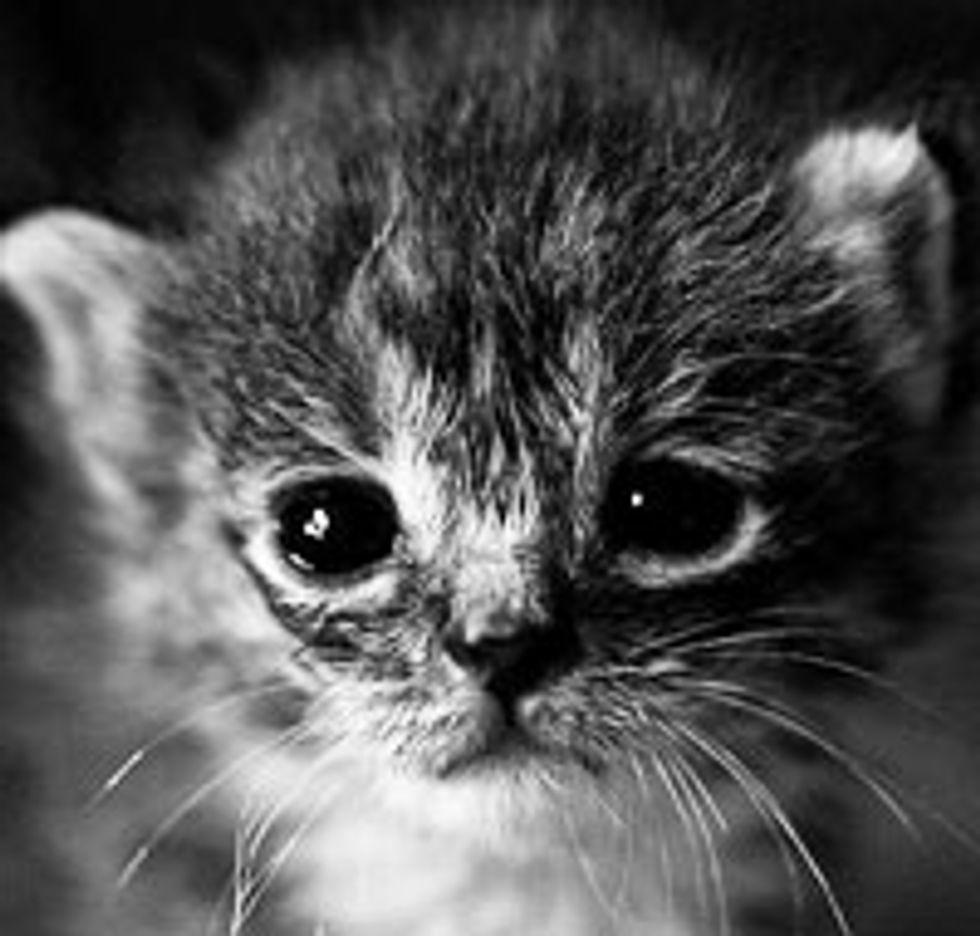 Kitten from Hopeless to Hopeful
