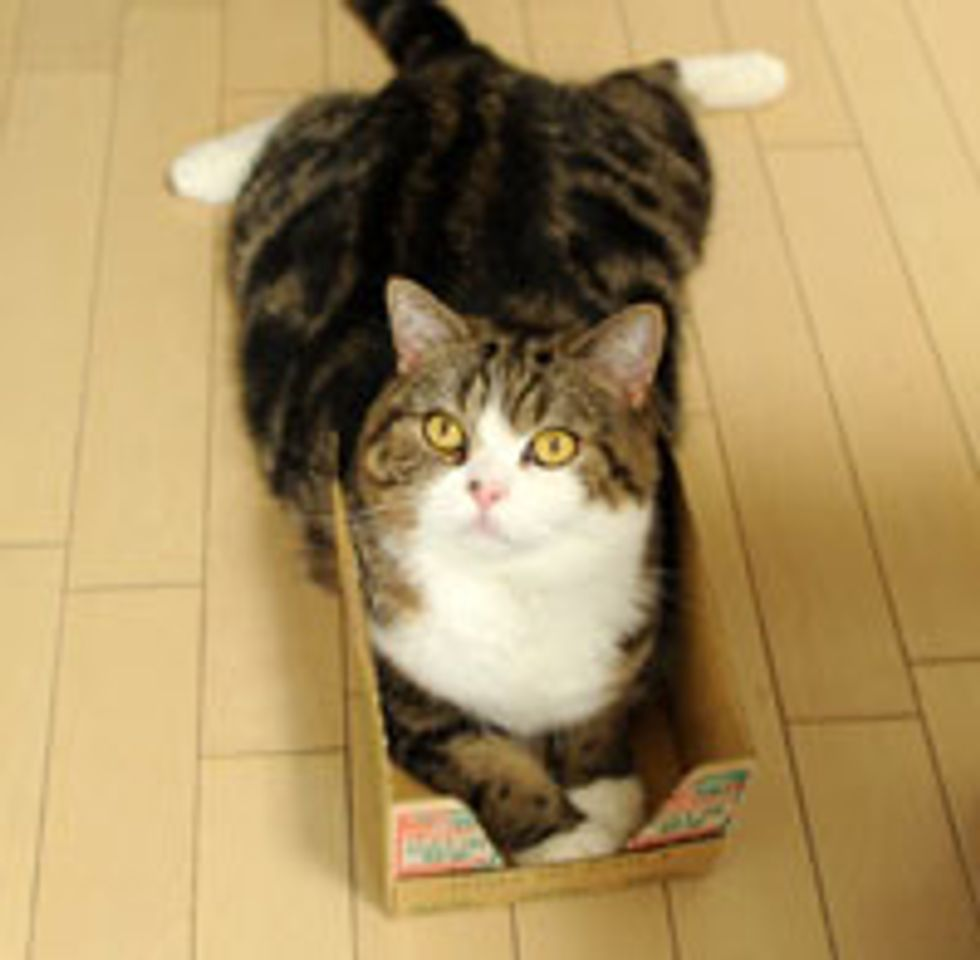 Maru Becomes Invincible in His Box