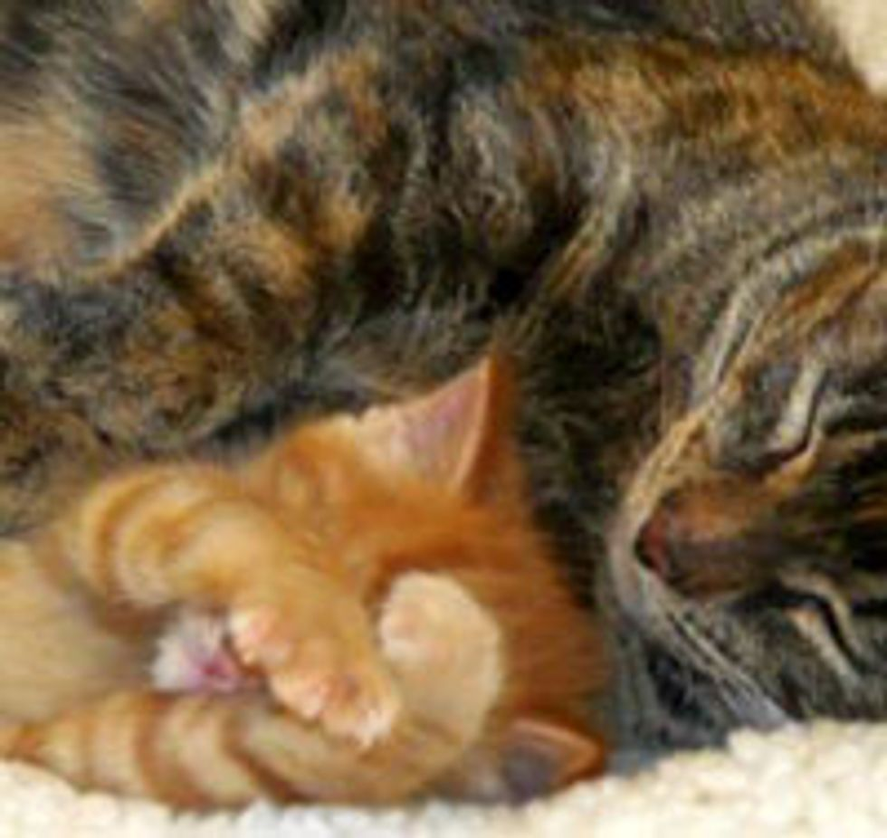 Story of a Loving Mama Cat and Her Only Son