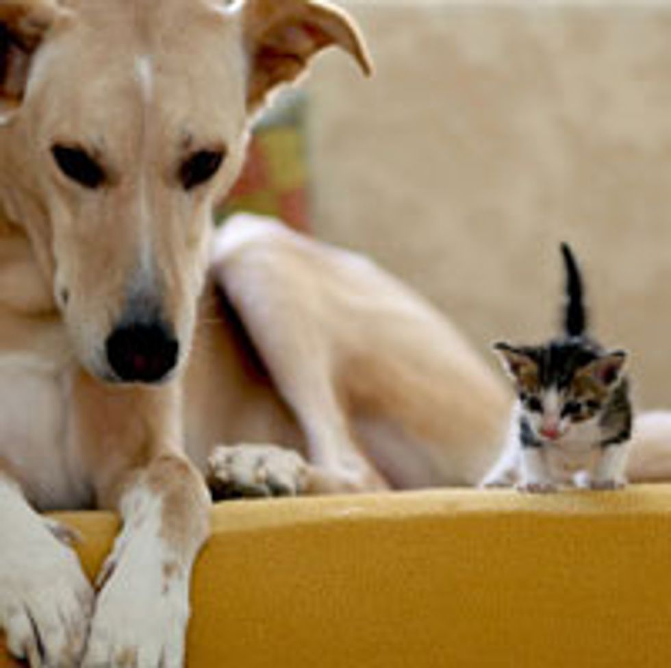 Foster Kitten Finds a Canine Couch Buddy