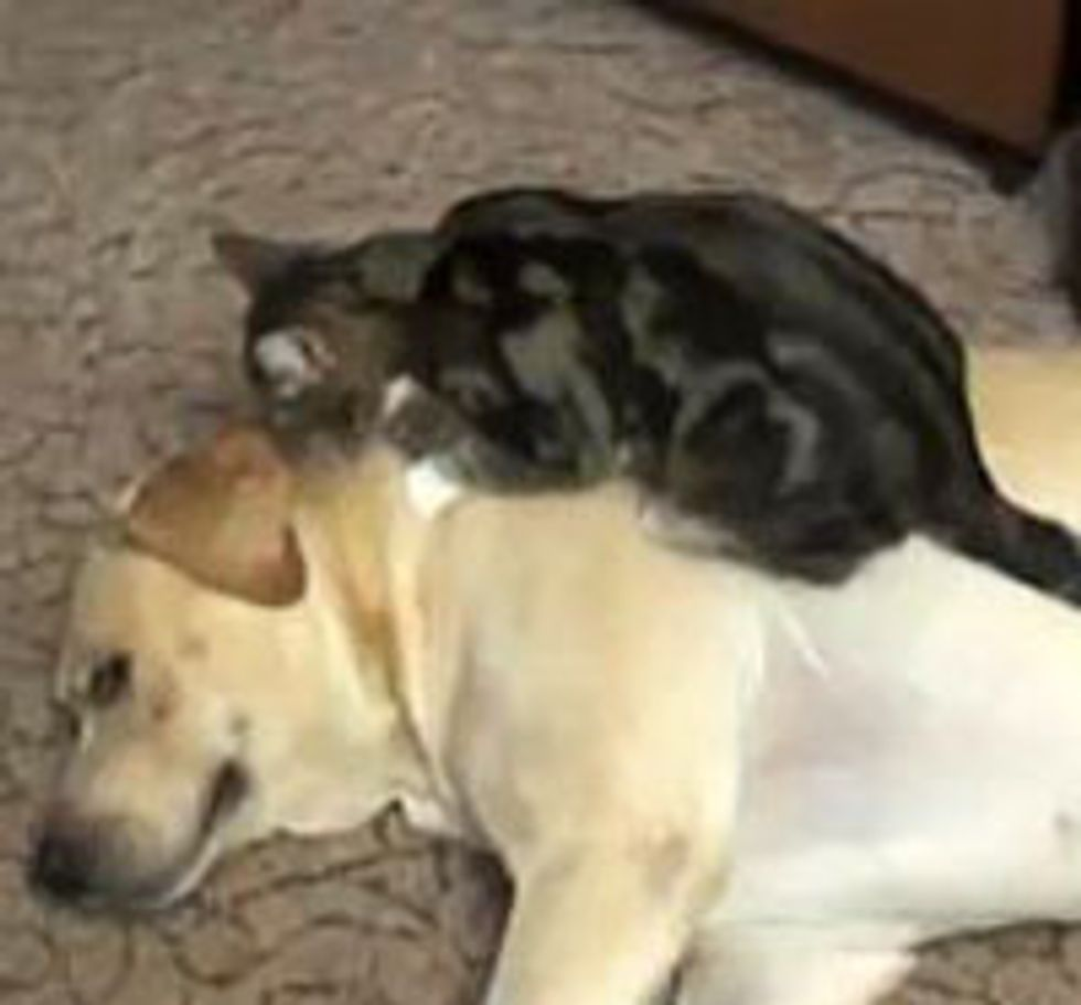 Kitty Giving Doggie Some Love