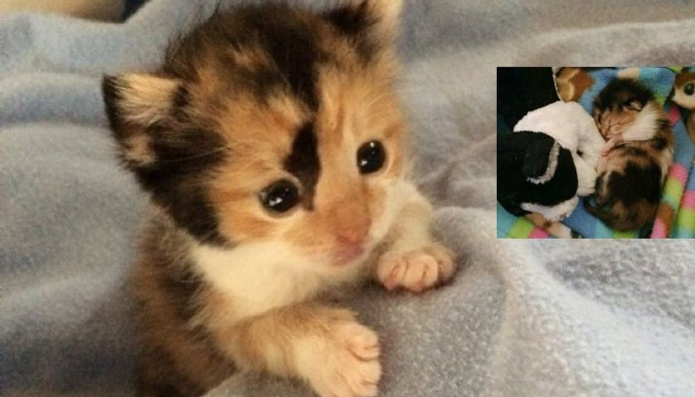 Tiny Calico Kitten Rescued Hours After Birth