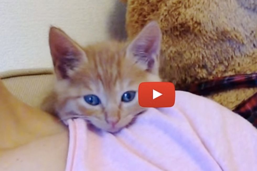 Little Kitten Falling Asleep On Shoulder