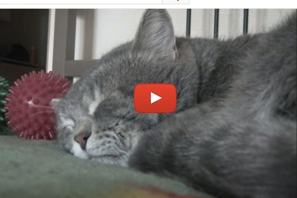 'When I cough, my cat quacks'
