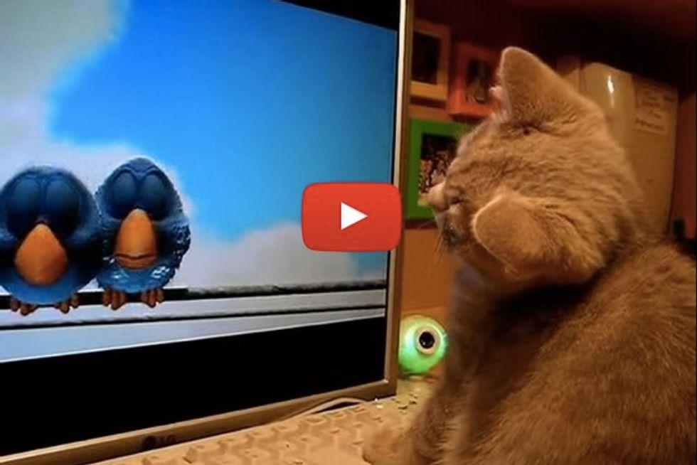 Kitten Watching Bird Cartoon
