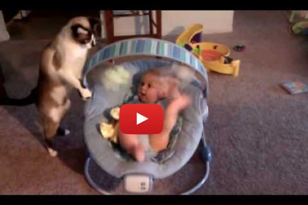 Cat Makes Baby Laugh While He Plays With Toys