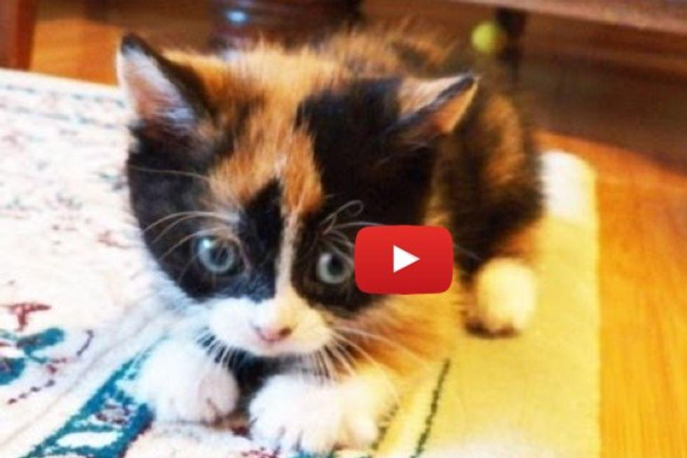 Little Cute Kitten Doing The Cutest Things