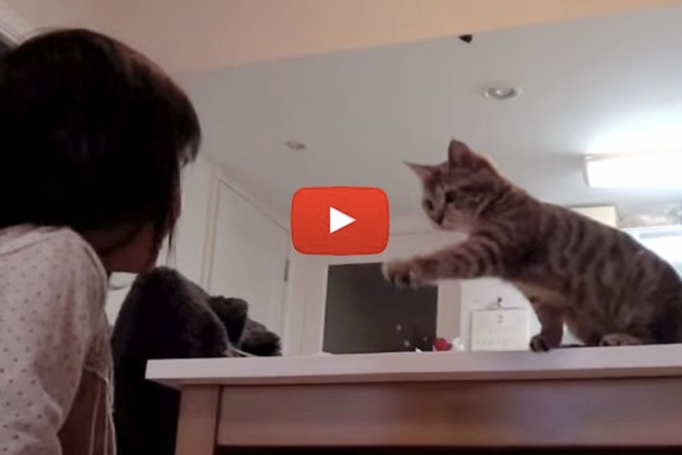 Kitten Playing Hide And Seek With Her Giggly Sister